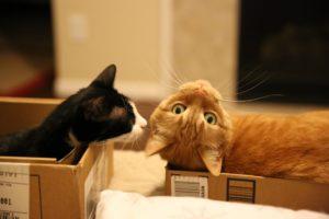 consells veterinaris 1. enriquiment ambiental gats
