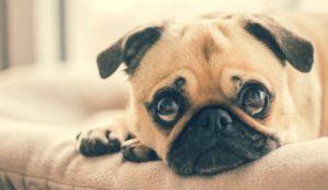 Consell veterinari girona com habituar el teu gos i gat als sorolls