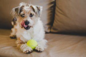 consells veterinaris girona 2. Juga amb el teu gos