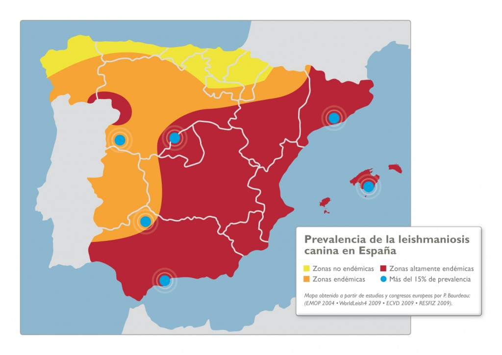 veterinari girona et mostra la prevalencia de leishmaniosi a Espanya